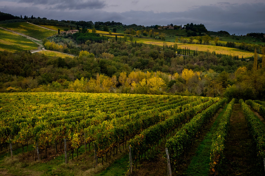 Vineyards near Radda in Chianti
