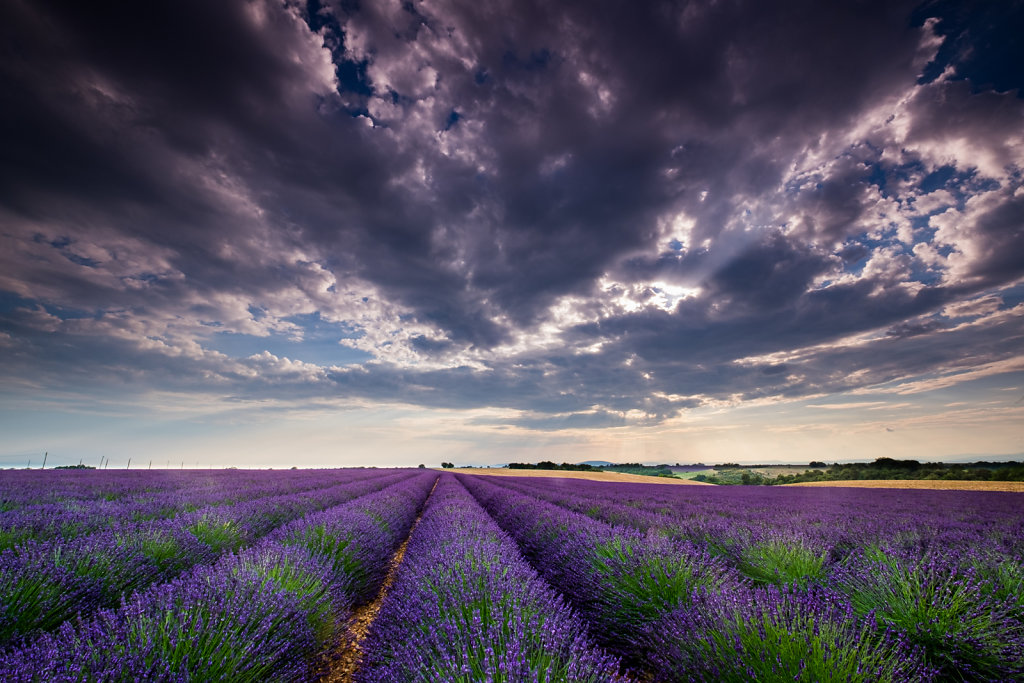 Valensole Plateau, Provence