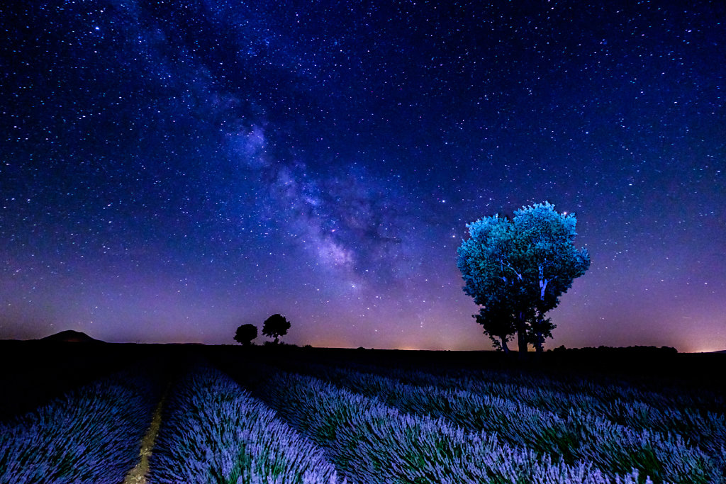 Midnight on the Valensole Plateau
