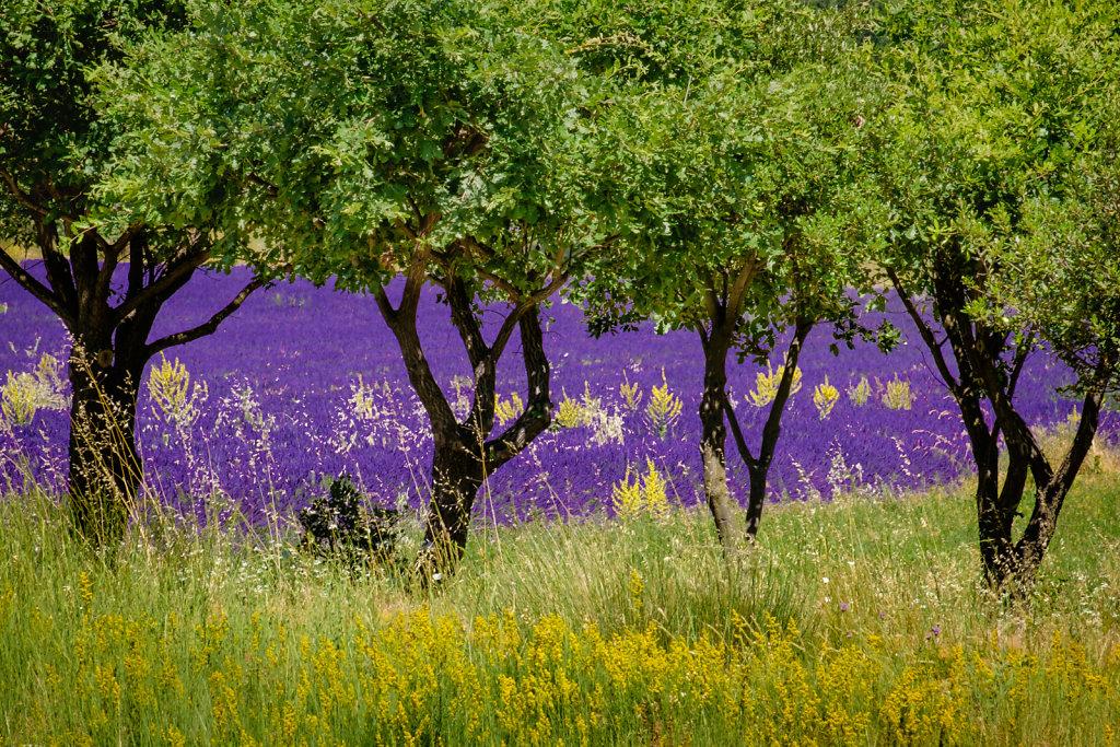 Near Banon, Provence